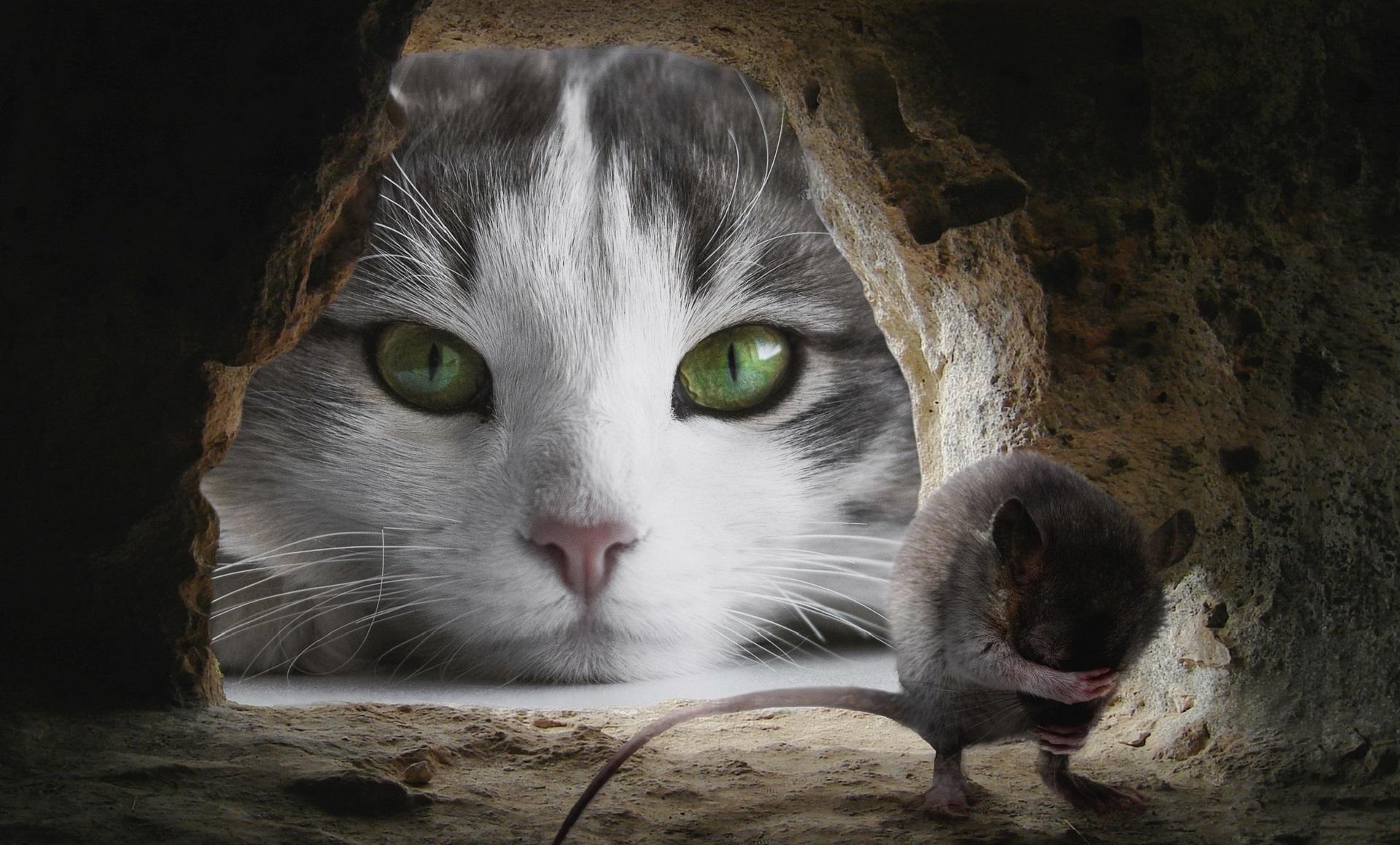 Katze Ernaehrung