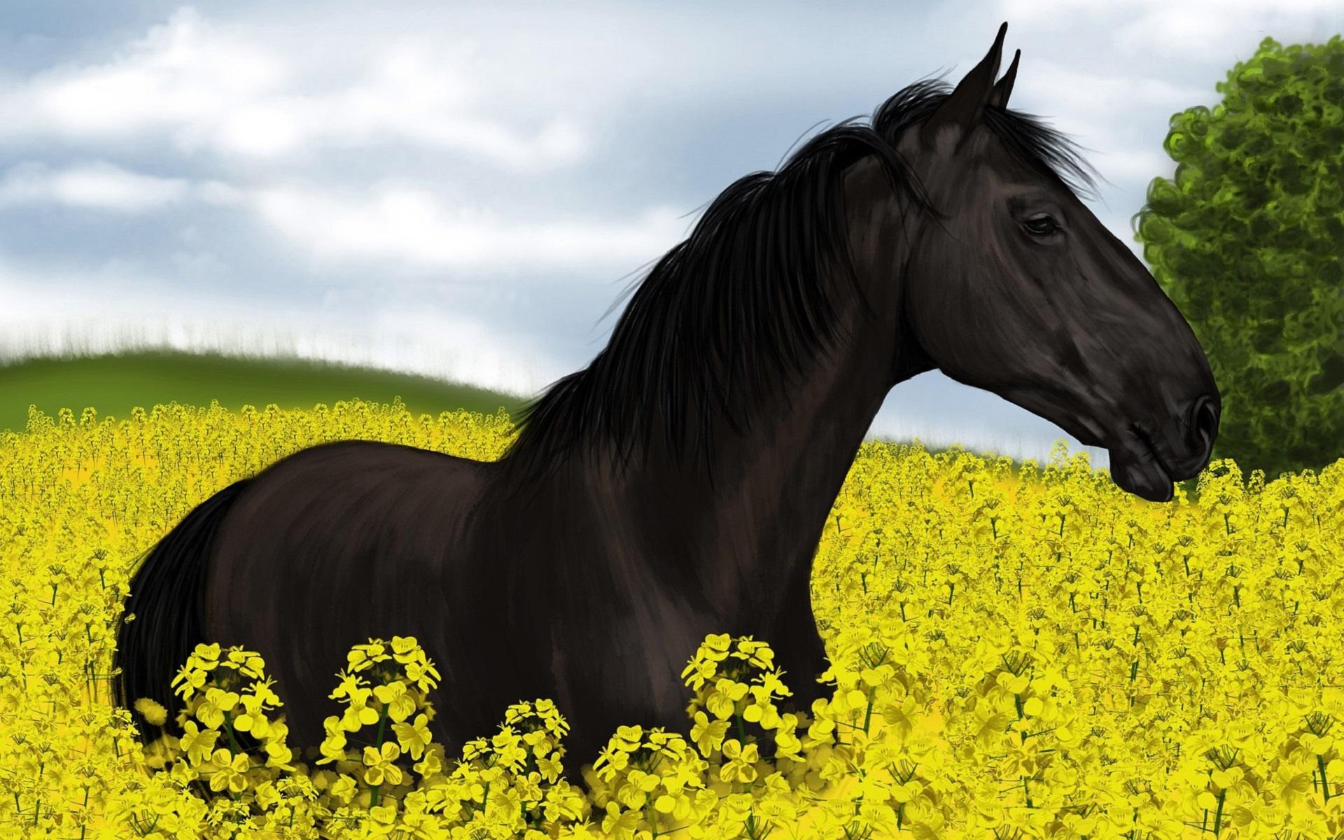 Pferd Energetik