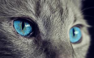 Verhaltensberater Katze