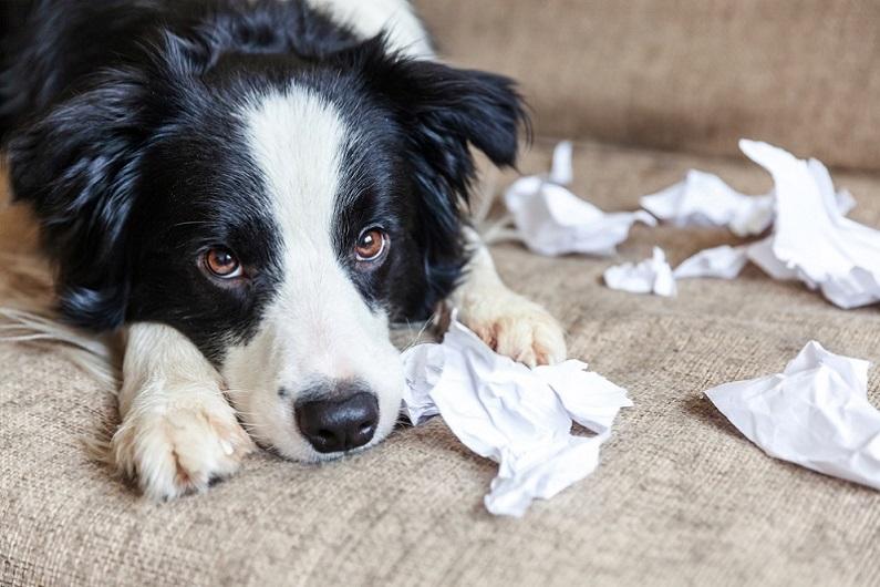 Verhaltensberater Hund